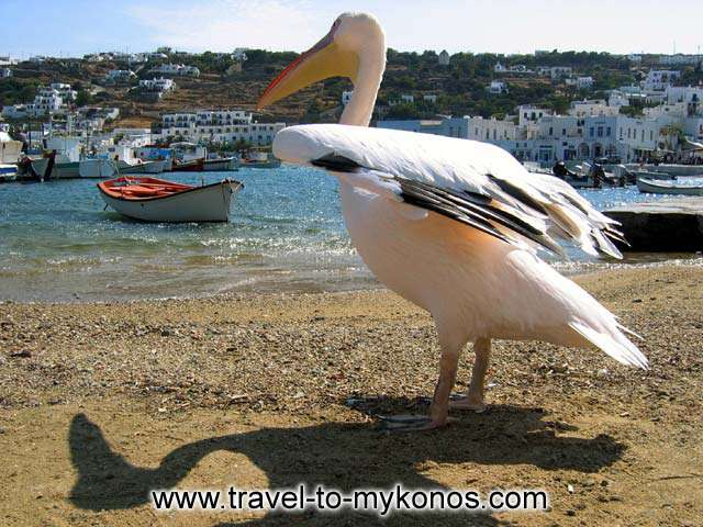 Petros, another symbol of Mykonos